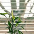 Find de rette persienner til boligen