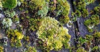Mos og alger på taget