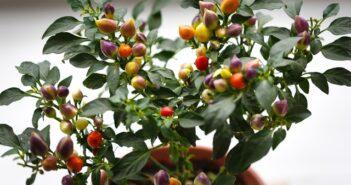 Giv din terrasse nyt liv med græske krukker
